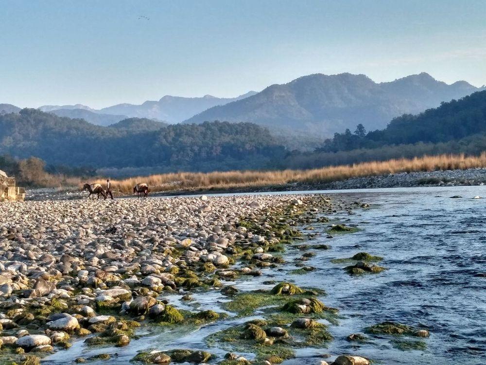 Kosi_River,_Jim_Corbett_National_Park,_Ramnagar,_Uttarakhand.jpeg